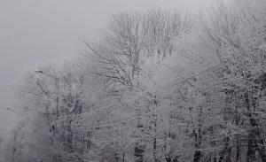 poza-iarna2